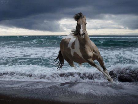 بالصور بالصور افضل تشكيلة للخيول والاحصنة والافراس العربية والاجنبية 10 10