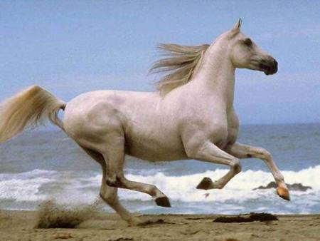 بالصور بالصور افضل تشكيلة للخيول والاحصنة والافراس العربية والاجنبية 10 11