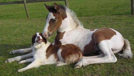 بالصور بالصور افضل تشكيلة للخيول والاحصنة والافراس العربية والاجنبية 10 12