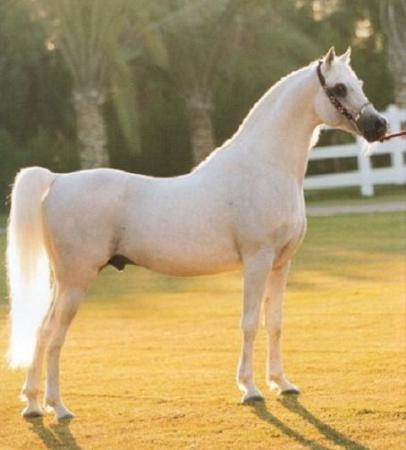 بالصور بالصور افضل تشكيلة للخيول والاحصنة والافراس العربية والاجنبية 10 13