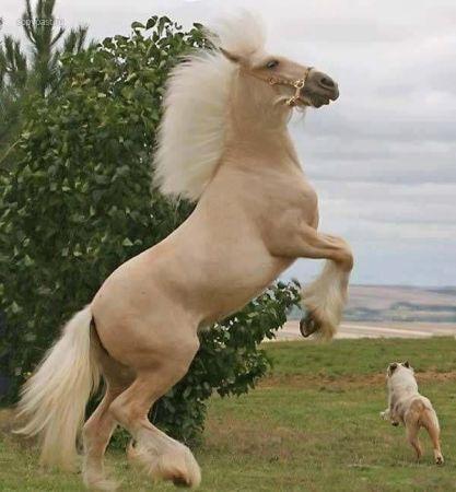 بالصور بالصور افضل تشكيلة للخيول والاحصنة والافراس العربية والاجنبية 10 15