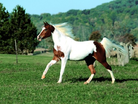 بالصور بالصور افضل تشكيلة للخيول والاحصنة والافراس العربية والاجنبية 10 16