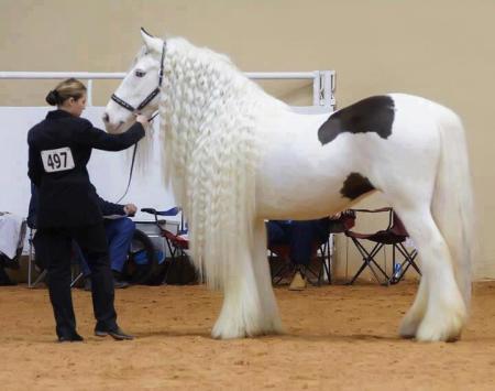 بالصور بالصور افضل تشكيلة للخيول والاحصنة والافراس العربية والاجنبية 10 18