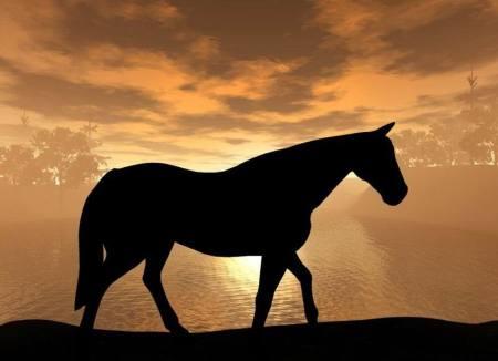 بالصور بالصور افضل تشكيلة للخيول والاحصنة والافراس العربية والاجنبية 10 2