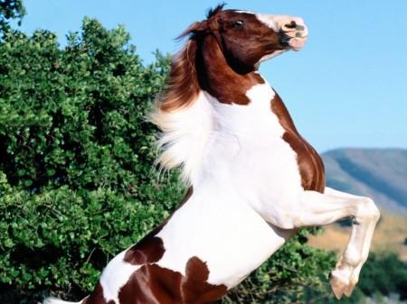 بالصور بالصور افضل تشكيلة للخيول والاحصنة والافراس العربية والاجنبية 10 3