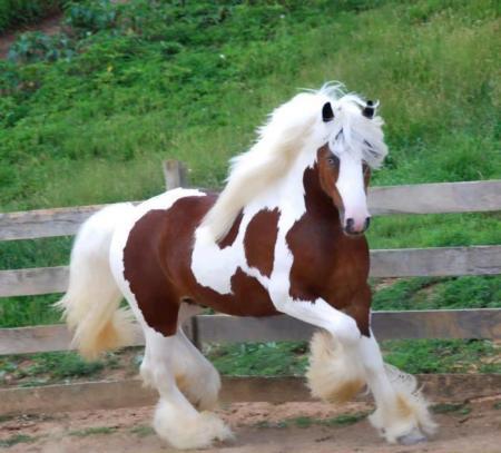 بالصور بالصور افضل تشكيلة للخيول والاحصنة والافراس العربية والاجنبية 10 5