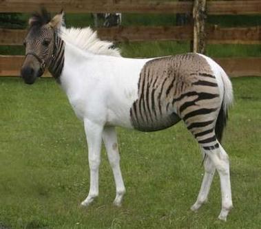 بالصور بالصور افضل تشكيلة للخيول والاحصنة والافراس العربية والاجنبية 10 6