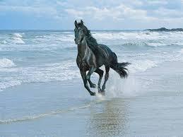 بالصور بالصور افضل تشكيلة للخيول والاحصنة والافراس العربية والاجنبية 10 9
