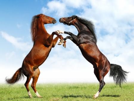 صورة بالصور افضل تشكيلة للخيول والاحصنة والافراس العربية والاجنبية