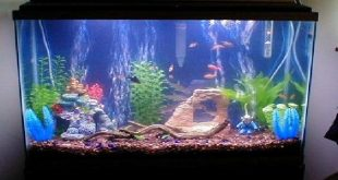 صوره حوض سمك صغير , احواض اسماك رائعه