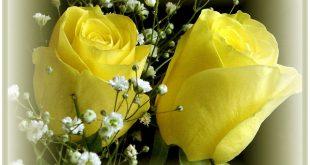 صور جمال الورد , اجدد صور وروود