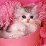 اضحك مع القطط , صور قطط رائعه