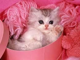 صوره اضحك مع القطط , صور قطط رائعه