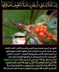 صور اعجاز القران الكريم,صور عن الاعجاز فى القران