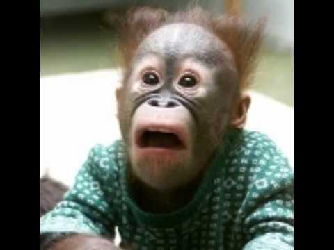 صور صور حيوانات مضحكة جدا , اجدد صور حيوانات مضحكه