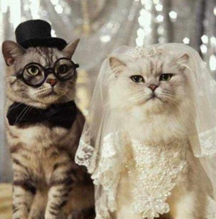 صوره صور مضحكه للقطط , صور قطط رائعه
