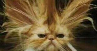 صور مضحكه للقطط , صور قطط رائعه