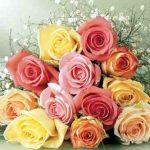 اجمل وردة في العالم , صور وروود رائعه
