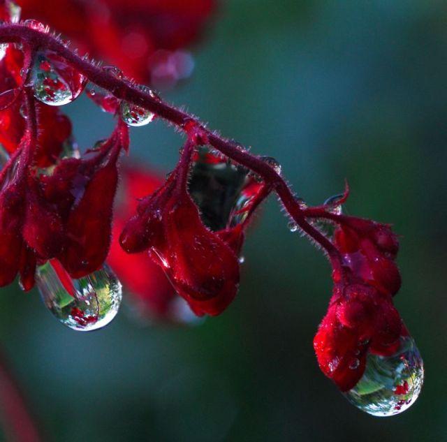 بالصور لوحات فنية رسمها المطر     ,   اجمل الصور لرسمات المطر بقطراته 1527 10