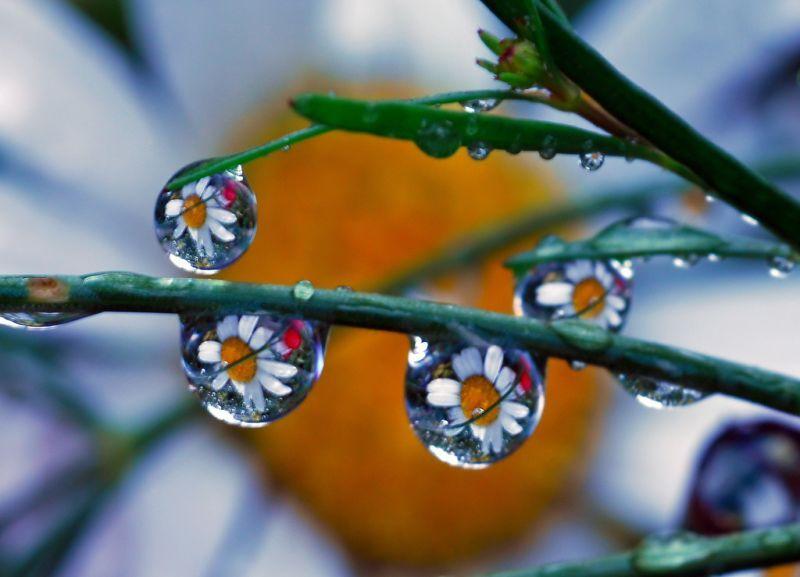 بالصور لوحات فنية رسمها المطر     ,   اجمل الصور لرسمات المطر بقطراته 1527 11