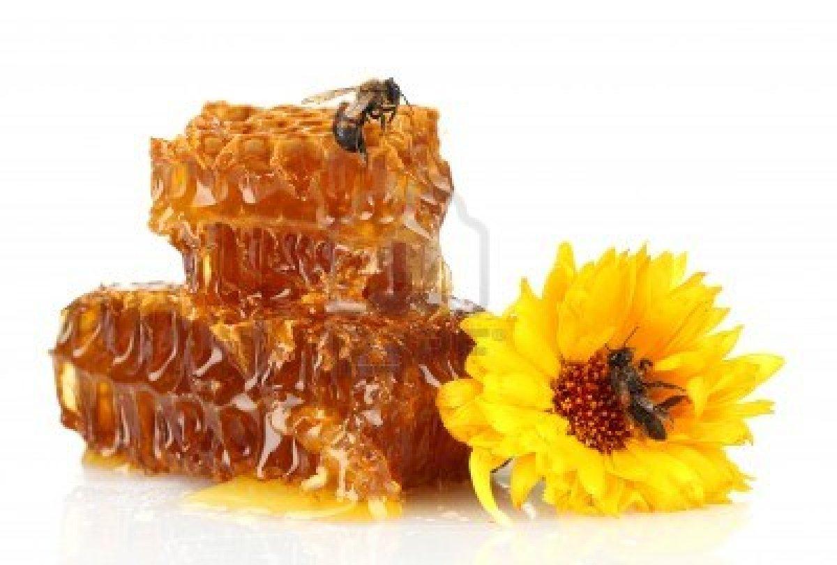 بالصور صور عسل النحل   ,   اروع الصور المميزه لعسل النحل الطبيعى 1532 9