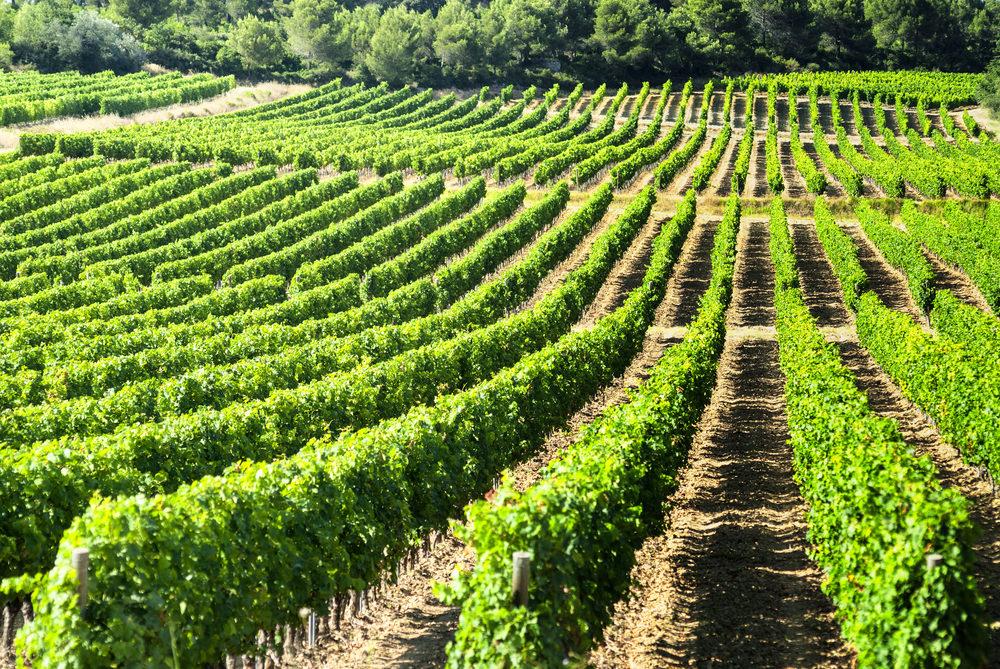 بالصور مزارع العنب في فرنسا , اجمل صور لمزارع العنب فى فرنسا 1576 3
