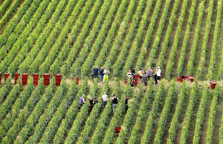 بالصور مزارع العنب في فرنسا , اجمل صور لمزارع العنب فى فرنسا 1576 4