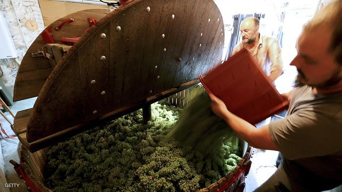 صور مزارع العنب في فرنسا , اجمل صور لمزارع العنب فى فرنسا