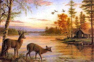 صورة صور فن جميل , اجمل وارقى الصور الفنيه