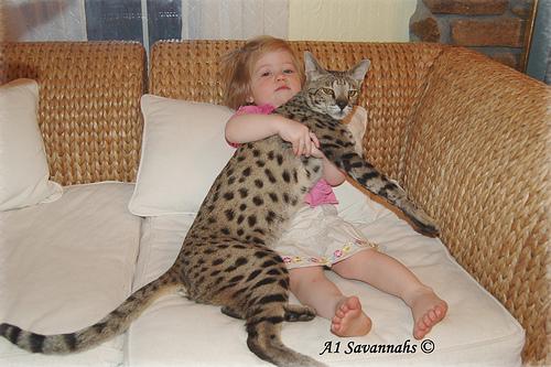 صوره اطول قطه في العالم , تبلغ 19 بوصة