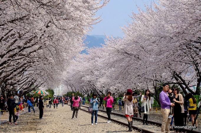 صور مناظر من كوريا الجنوبيه , عالم السحر والخيال