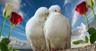 صور الحب هو , كل ما تشعر به من دفئ المشاعر