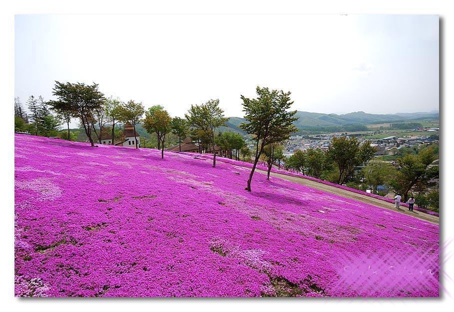 بالصور الحديقة البنفسجية في اليابان 300 4