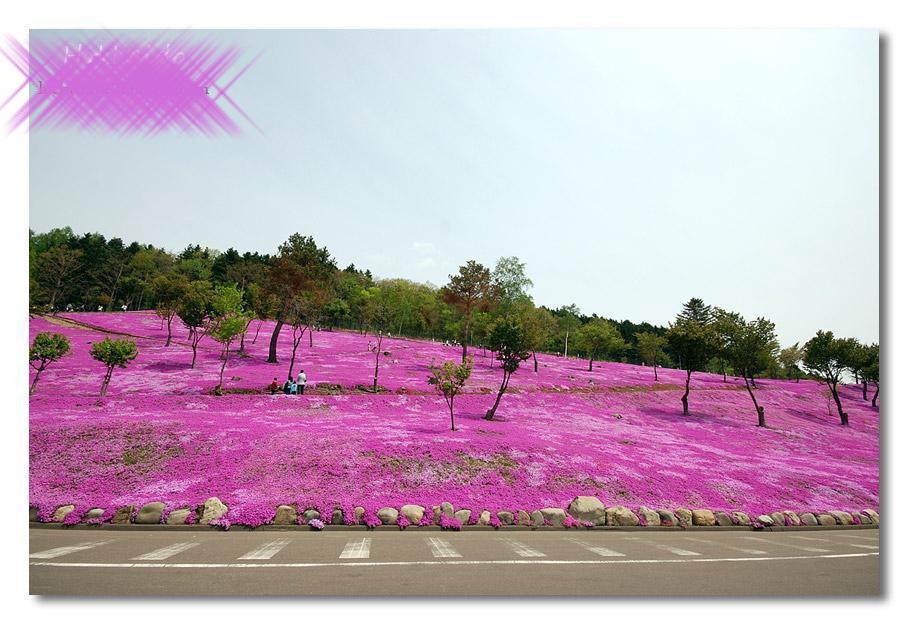 بالصور الحديقة البنفسجية في اليابان 300