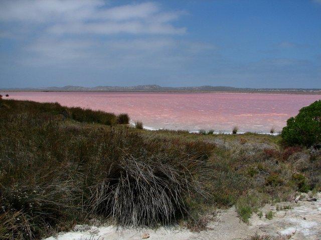 بالصور البحيره الوردية من عجائب الطبيعة 326 1