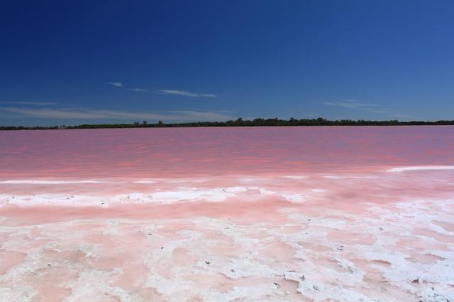 بالصور البحيره الوردية من عجائب الطبيعة 326 4
