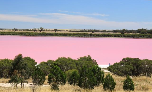 بالصور البحيره الوردية من عجائب الطبيعة 326 5
