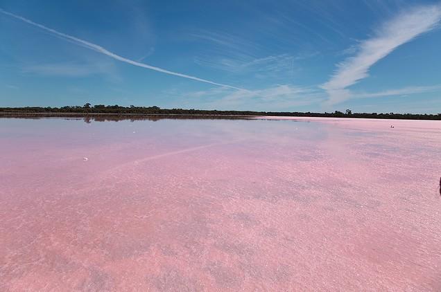 بالصور البحيره الوردية من عجائب الطبيعة 326 6