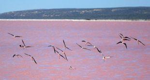 البحيره الوردية من عجائب الطبيعة