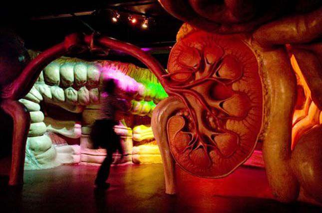 بالصور متحف جسم الانسان في هولندا 359 6