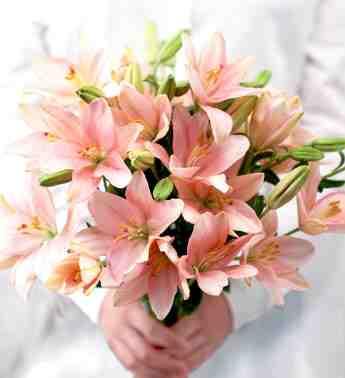 بالصور انواع الزهور ومعانيها بالصور 366 1