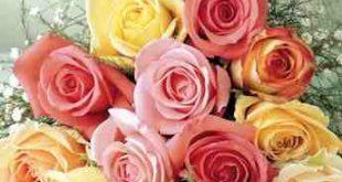 انواع الزهور ومعانيها بالصور