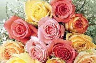 صور انواع الزهور ومعانيها بالصور