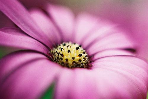 بالصور انواع الزهور ومعانيها بالصور 366 3