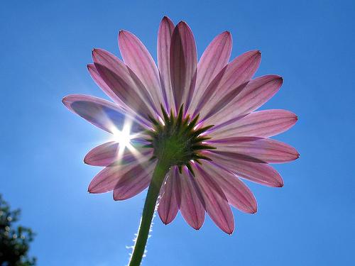 بالصور انواع الزهور ومعانيها بالصور 366 5