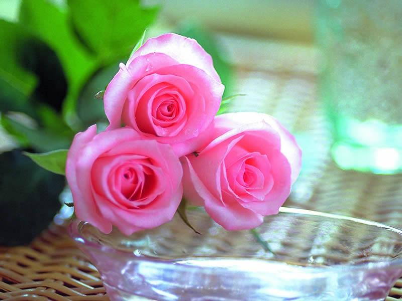 بالصور انواع الزهور ومعانيها بالصور 366 9