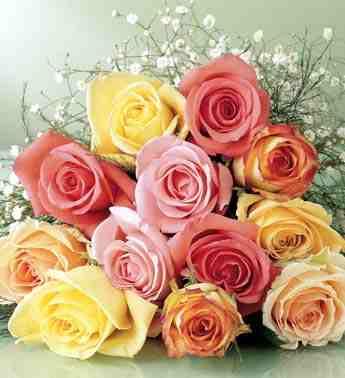 بالصور انواع الزهور ومعانيها بالصور 366