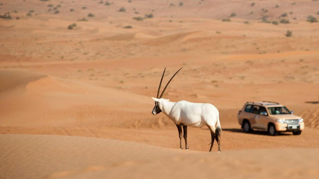 صوره فندق في صحراء الربع الخالي