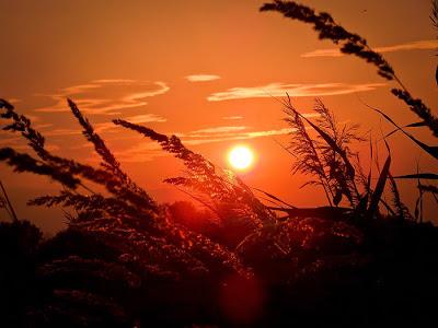 بالصور غروب الشمس في القطب الشمالي 471 2