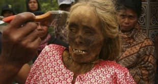 في اندونسيا يخرجون الجثث لتغير ملابسها كل 3 سنوات